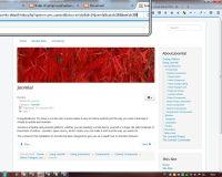 CMS = Dynamische Website